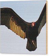 Turkey Vulture Evening Flight Wood Print