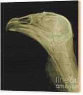 Turkey Vulture Head, X-ray Wood Print
