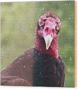 Turkey Vulture Wood Print