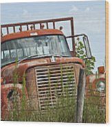 Turned Out To Pasture Wood Print by Wilma  Birdwell