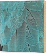 Turquoise Blue Feathers Wood Print