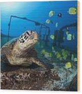 Turtle And Sealife Wood Print