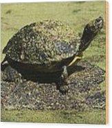 Turtle Camouflage Wood Print