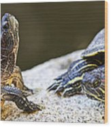 Turtle Conversation Wood Print