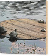 Turtle Family Beach Wood Print by Suzanne Gaff