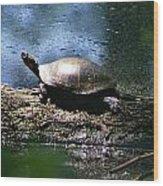 Turtle I Wood Print
