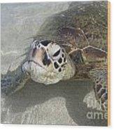 Turtle Love  Wood Print