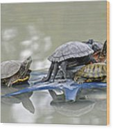 Turtle Pileup Wood Print