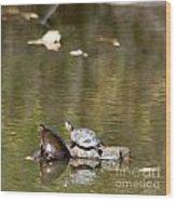 Turtle Print Wood Print
