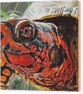 Turtle Smile Wood Print