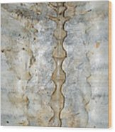 Turtle Spine Wood Print