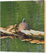 Turtle Sunbathing  Wood Print