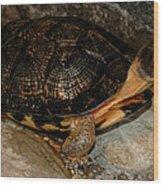 Turtle Time On The Rocks Wood Print