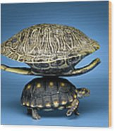 Turtle With Larger Shell On Back Wood Print