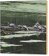 Turtles On Log Scarboro Pond#1  Wood Print