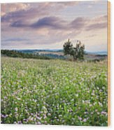 Tuscany Flowers Wood Print