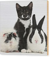 Tuxedo Kitten With Black Dutch Rabbit Wood Print