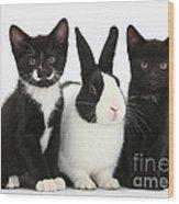 Tuxedo Kittens With Dutch Rabbit Wood Print