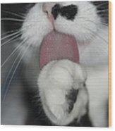 Tuxedo Kitty Lollipop Wood Print