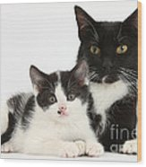 Tuxedo Mother Cat And Kitten Wood Print