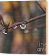 Twig Wood Print