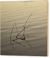 Twigs Breaking The Calm Surface Of The Lake On Sunset Wood Print