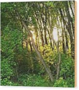 Twilight In The Woods Wood Print