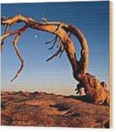Twilight View Of A Jeffrey Pine Tree Wood Print