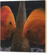 Twin Friends Malboro Fish  Wood Print