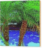 Twin Palms 2 Wood Print