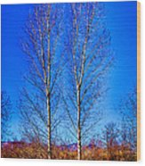 Twin Trees At South Platte Park Wood Print