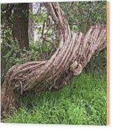 Twisted Tree 1123 Wood Print