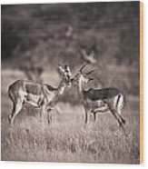 Two Antelopes Together In A Field Wood Print