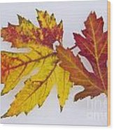 Two Autumn Maple Leaves  Wood Print