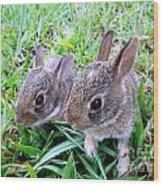 Two Baby Bunnies Wood Print