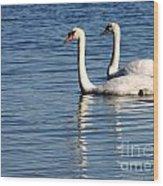 Two Beautiful Swans Wood Print by Sabrina L Ryan