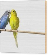 Two Budgies On A Perch Wood Print