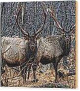 Two Bulls Wood Print by Wade Aiken