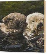 Two Captive Sea Otters Floating Back Wood Print