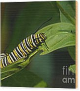 Two Caterpillars Wood Print by Steve Augustin