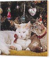 Two Cats At Christmas Wood Print
