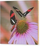 Two Colorful Butterflies On Cone Flower Wood Print