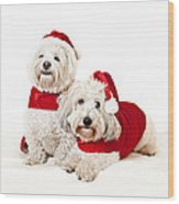 Two Cute Dogs In Santa Outfits Wood Print