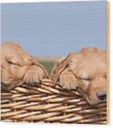 Two Cute Puppies Asleep In Basket Wood Print