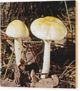 Two Death Cap Mushrooms Wood Print