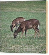 Two Does Grazing Wood Print