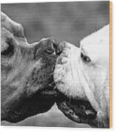 Two Dogs Kissing Wood Print