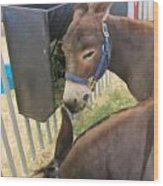 Two Donkeys Eating Wood Print by Donna Munro