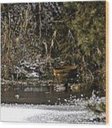 Two Ducks And A Tub Wood Print