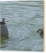 Two Ducks Diving Wood Print by Matthias Hauser